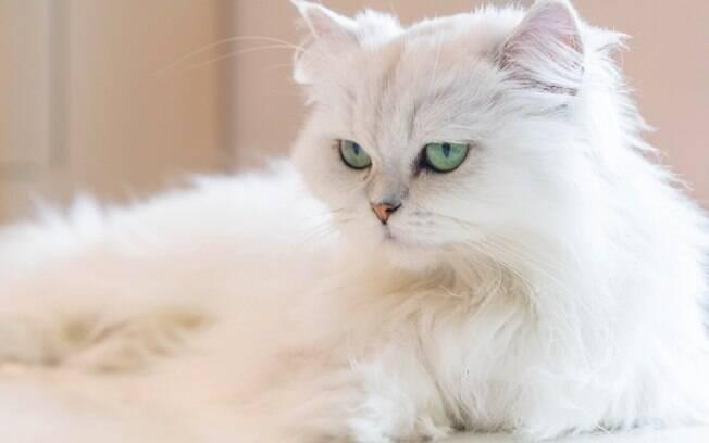 Algumas raças de gatos são mais indicadas para crianças do que outras por causa de sua personalidade