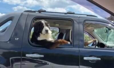 Cão põe o 'braço' para fora da janela e joga charme para o carro vizinho