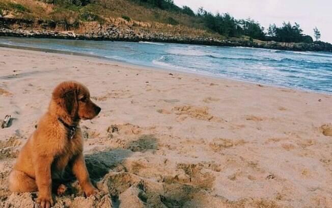 A praia é uma ambiente extremamente perigoso para os cachorros.