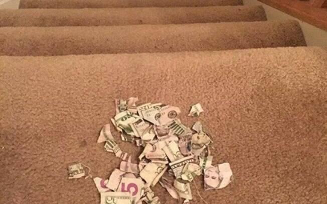 Notas de US$ 5 e 20 foram rasgadas pela criança após não concordar com valor recebido pela mãe