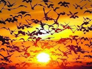 """""""Big-bang"""". O estudo fortalece a teoria de que as aves se diversificaram em muitas espécies em período considerado curto, entre 10 e 15 milhões de anos, após a extinção dos dinossauros"""