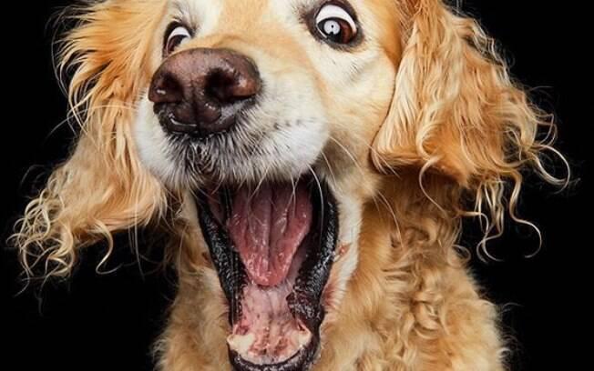 Fotógrafa capta expressões faciais hilárias de cães pegando petiscos