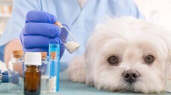 Homeopatia pode ser usada para qualquer doença que seu pet tenha