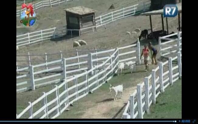 Raquel deixa cabras escaparem do pasto