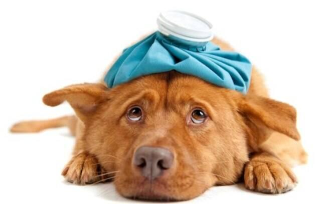 Intoxicação em cães: saiba o que fazer se seu pet estiver com esse problema