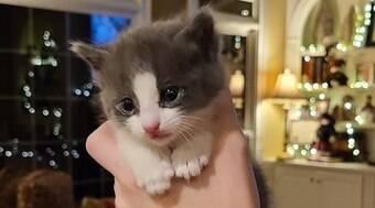 Gato encontrado em esgoto é adotado e vira amigo de cães