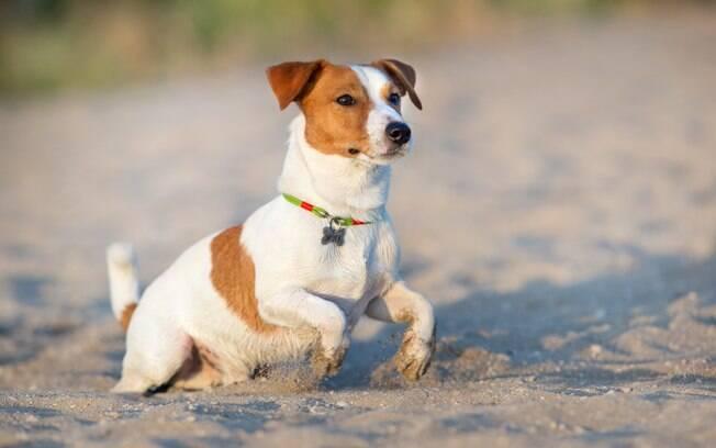 Na pria, os cães correm o risco de sofrer com o excesso de calor, desidratação, ingestão de restos de peixe ou crustáceos ou comida deixada pelos banhistas na areia