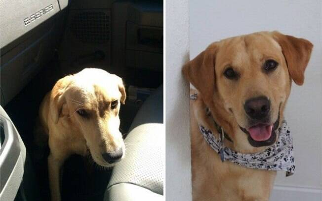 Esse cachorro estava bem triste antes de ser adotado.