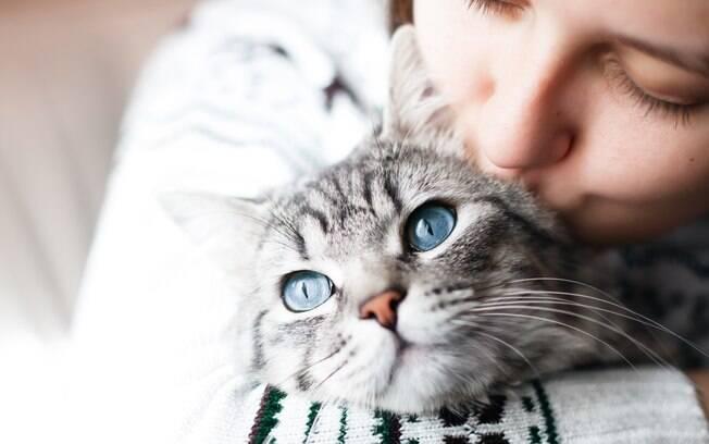 gato com dona