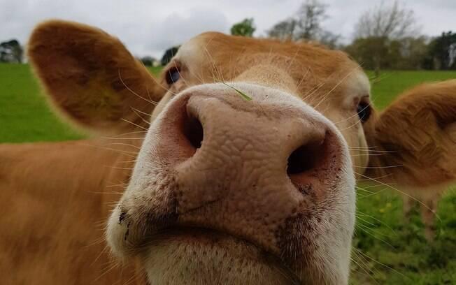 Se 7% acreditam que o achocolatado vem das vacas marrons, de onde viria, então, o leite aromatizado sabor morango?