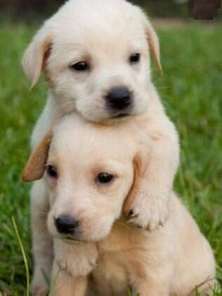 A socialização se inicia quando filhote na convivência com os irmãos