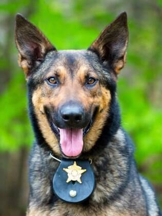 Ajudar na polícia é um dos trabalhos recentes dos cachorros