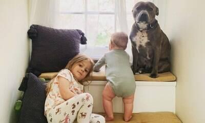 Conheça o pitbull Simon, o melhor irmão mais velho