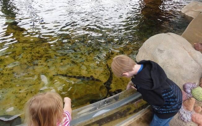 Logo na entrada do parque é possível tocar em filhotes de tubarão em uma piscina rasa