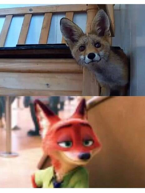 raposa