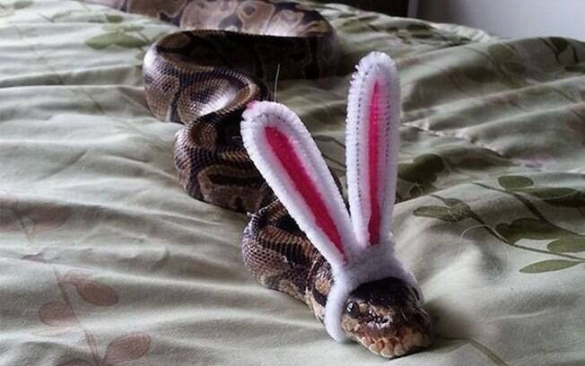 Outra cobra com orelhas de coelhinho.