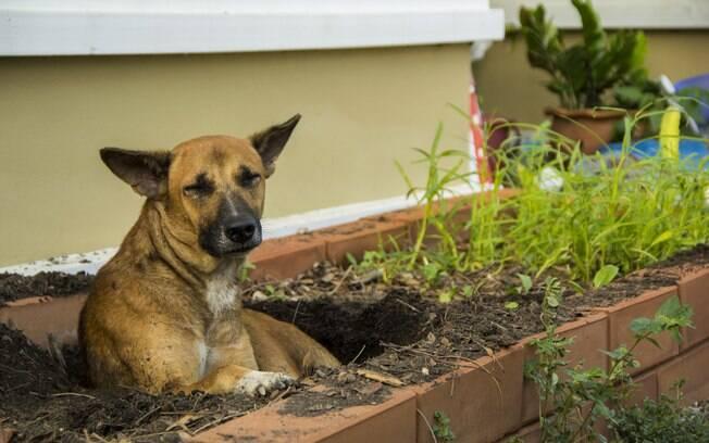 Permitir que o cão passe mais tempo dentro de casa é uma dica que funciona na maioria das vezes