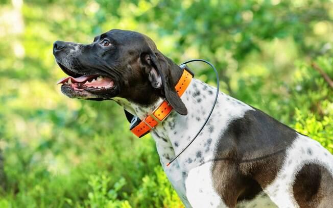 A maioria dos GPS para cães vem acoplados na coleira
