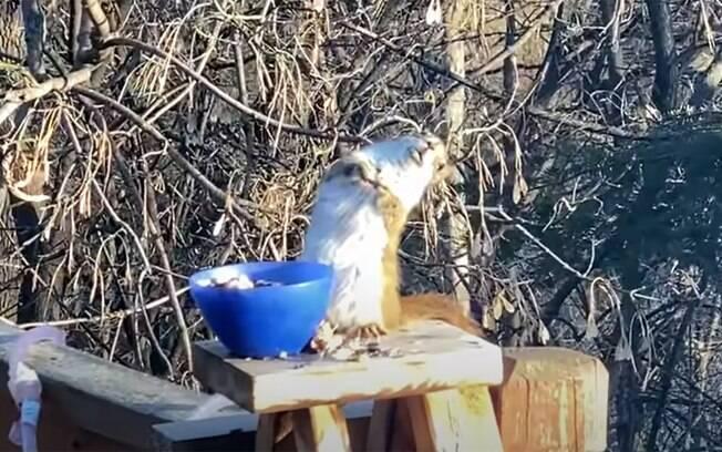 Katy Morlok acidentalmente deixou o esquilo que frequenta o jardim dela bêbado