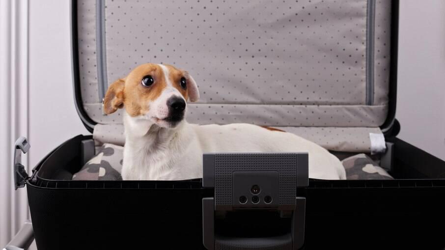 A entrada de cachorros de estimação está suspensa por temporariamente nos EUA