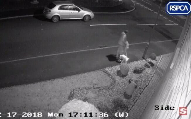 Um cachorro da raça Bull Terrier Staffordshire foi abandono pelo seu dono em uma estrada em Stoke-on-Trent, que tentou desesperadamente voltar para o carro
