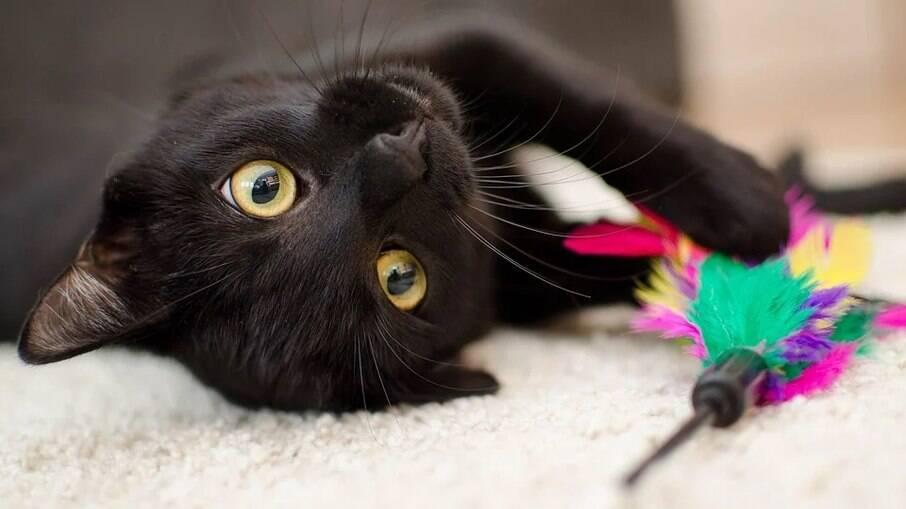 Brinquedo e petiscos ajudam na hora de ensinar truques aos gatos