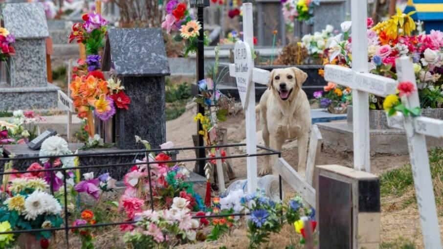 Bobby mora no cemitério para ficar ao lado de seu tutor que faleceu há três anos