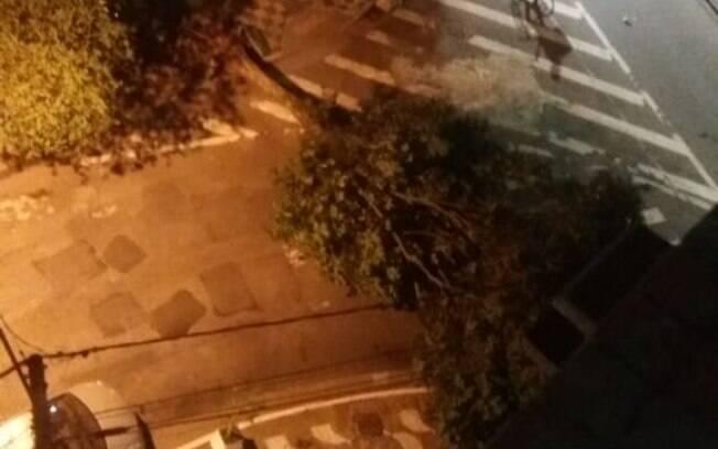 Queda de árvore na Heitor Vila Lobos com o Canal 7.