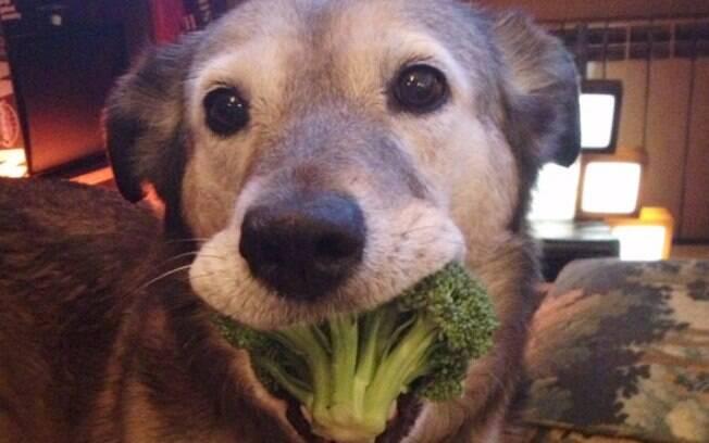 Animais comendo (O cão que ama brócolis)