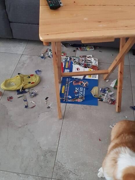 Corgi destruiu álbum da copa quase completo de sua dona
