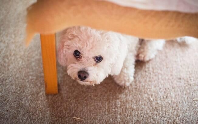 Ao contrário do que se espera, alguns cachorros tem muito medo de passear