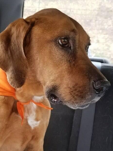 Cadela perdida reapareçe dois anos depois em um posto de gasolina