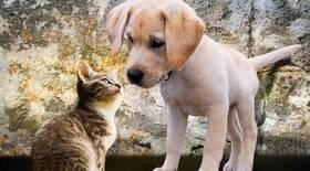 15 mitos e verdades sobre a tosa em cães e gatos
