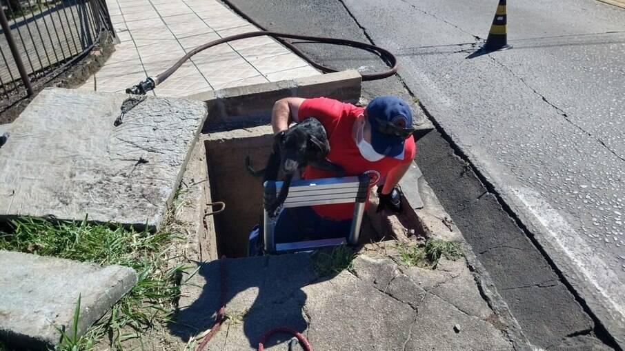 Bombeiros resgatam cãozinho em tubulação de esgoto em SC