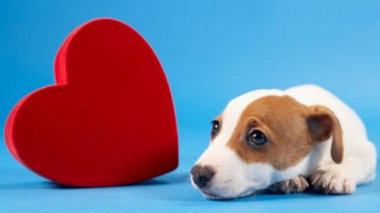 Saiba Todos Os Cuidados Necessários Com O Coração Do Pet