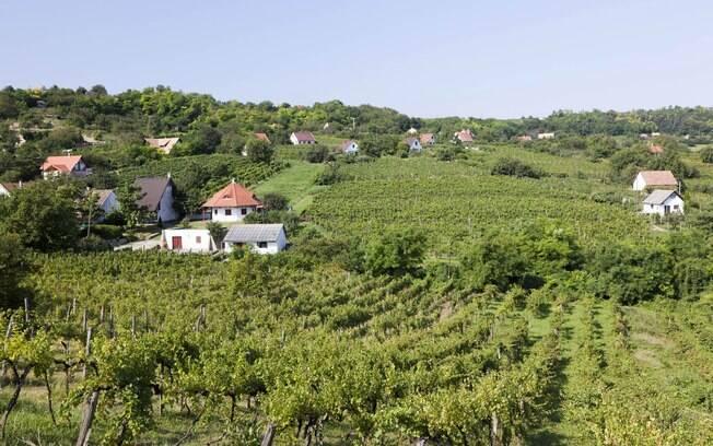 Szekszard, na Hungria, está entre os destinos indicados para o turismo gastronômico devido as suas vinícolas e vinhos