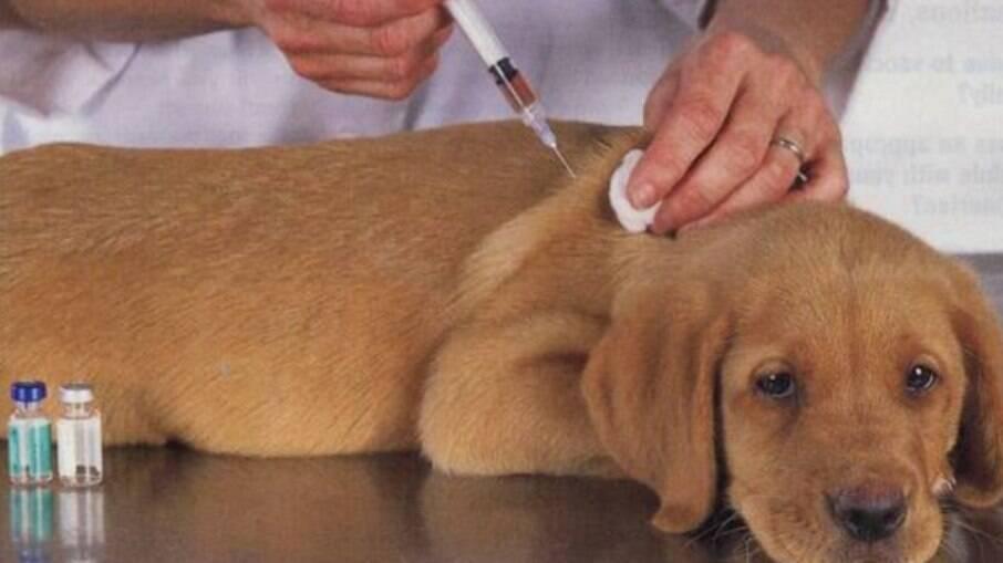 Além dos repelentes, a vacinação é um meio importante para o combate à proliferação da doença