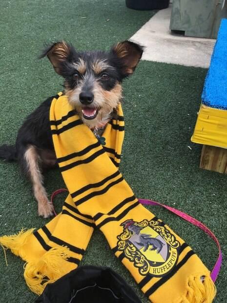 Abrigo seleciona animais nas casas de Hogwarts para ajudar a adoção