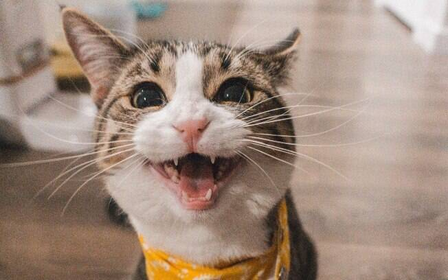 Acostume o gatinho para reagir a diferentes situações