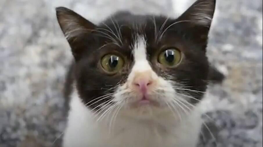 A melhor forma de precaver o felino da doença é por meio de vacinas e evitando seu contato com a rua
