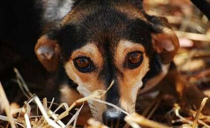 Ansiedade canina: quais os sinais e como tratar