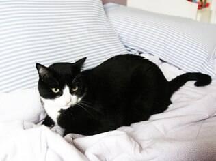 Bichos podem ir para a cama, desde que sejam tomados todos os cuidados recomendados pelo veterinário