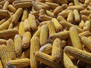 Na fazenda Braz Filizzola, o insumo vem do milho cultivado na safrinha
