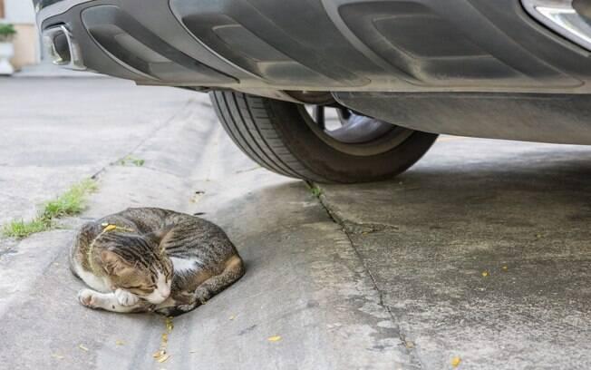 Algumas dicas podem ajudar a salvar a vida de um gato atropelado