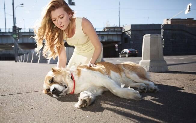Em casos de acidentes, é importante o dono saber como agir para aumentar as chances de recuperação ao politraumatismo canino