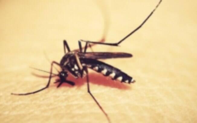 Aedes aegypti são soltos em Belo Horizonte em alternativa de combate à dengue