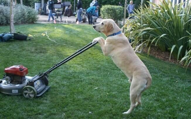 Um cachorro aparando a grama já que ao que parece é tudo ele nessa casa.