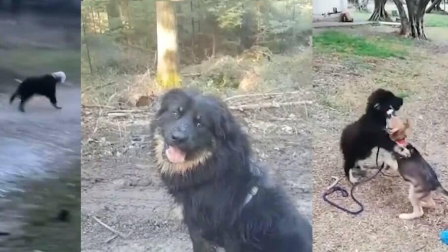 Cachorro resgatado com garrafa presa a cabeça ganhou um lar