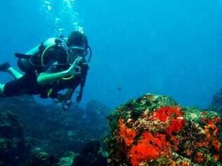 Nos parranchos também dá para mergulhar com cilindro para ver os corais