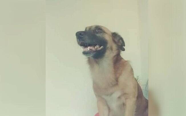 Animal foi morto a tiros enquanto passeava na rua